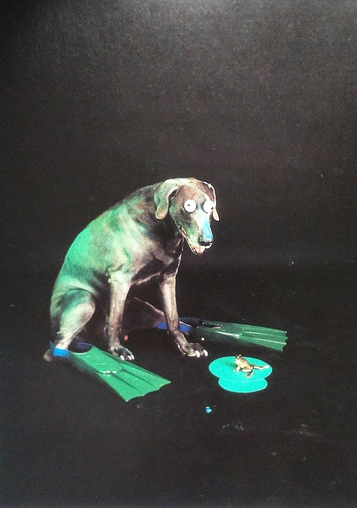 William Wegman Grenouille, marketing internetowy