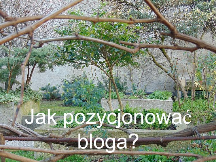 Jak pozycjonować bloga.