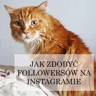jak zdobyć followersów na instagramie
