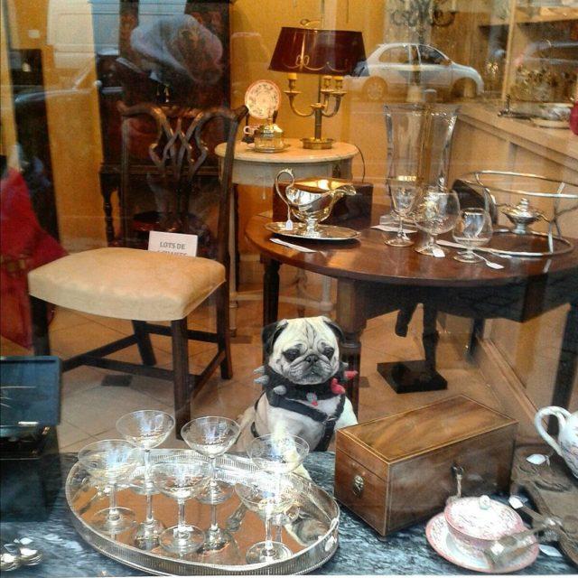 Pies w skadzie porcelany Czy istnieje solidniejsza reklama solidnoci porcelanyhellip